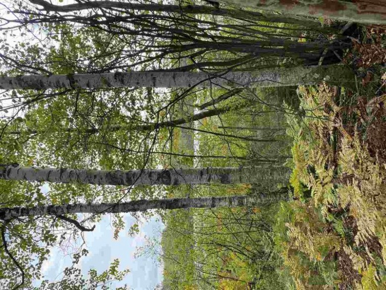 16960 Lewis Lane, Townsend, WI by Redefined Realty Northwoods $60,000