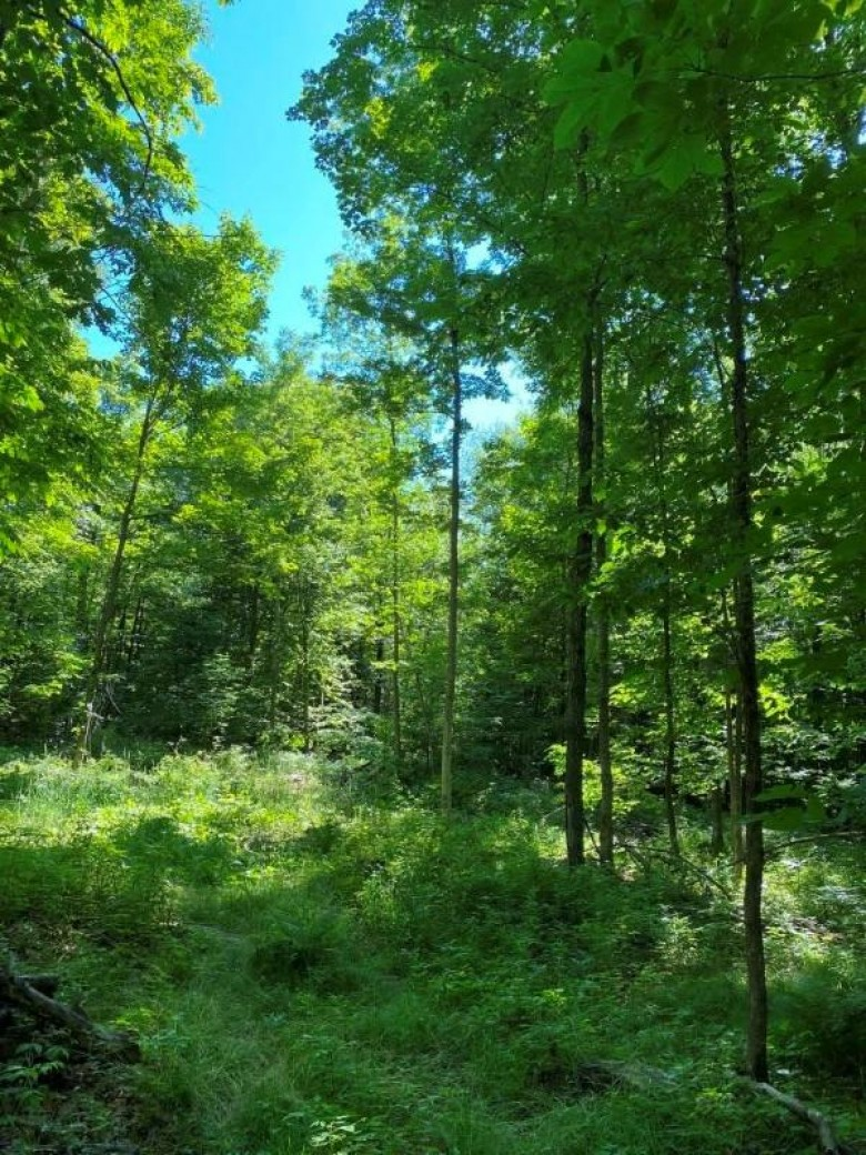 15.65 ACRES Prehn Drive, Merrill, WI by Coldwell Banker Action $144,555