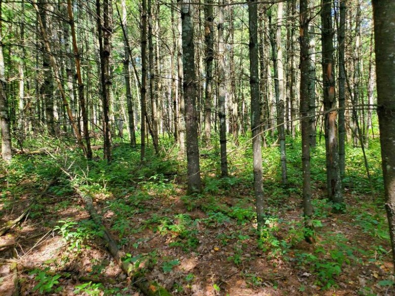 04 River Road Ringle, WI 54471 by First Weber Real Estate $165,000