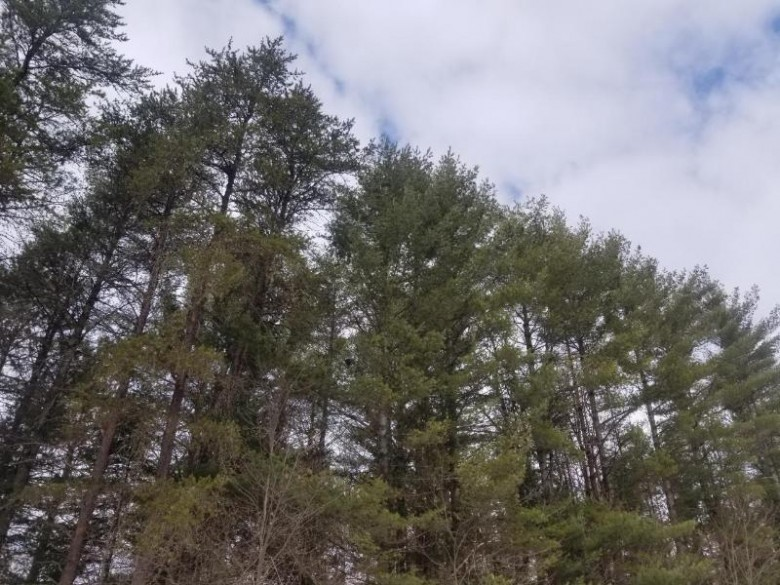 ON Loon Lake Rd LOT 7, Lincoln, WI by Re/Max Property Pros $19,350