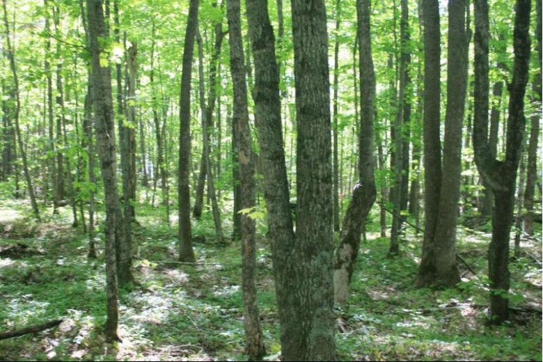 TBD Lakeshore Dr 42, Ontonagon, MI by First Weber Real Estate $179,950