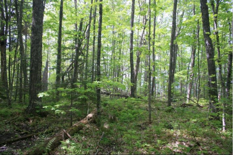 TBD Lakeshore Dr 52, Ontonagon, MI by First Weber Real Estate $134,950