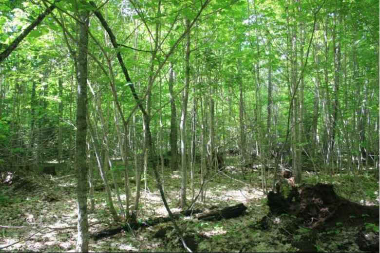 TBD Lakeshore Dr 57, Ontonagon, MI by First Weber Real Estate $129,950