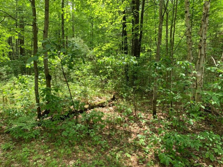 LOT 23 Whitetailed Deer Dr, Wilson, WI by Lakeplace.com - Vacationland Properties $25,999