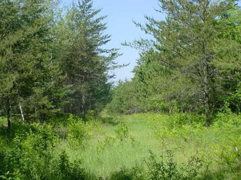 ON Cth O, Caswell, WI by First Weber Real Estate $72,000