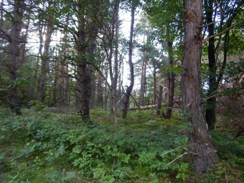 TBD Old County W, Winchester, WI by Headwaters Real Estate $75,000
