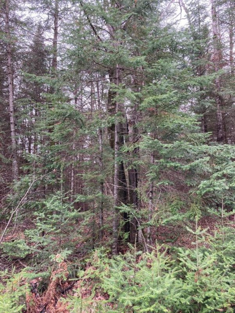ON Cth G, Enterprise, WI by First Weber Real Estate $126,250