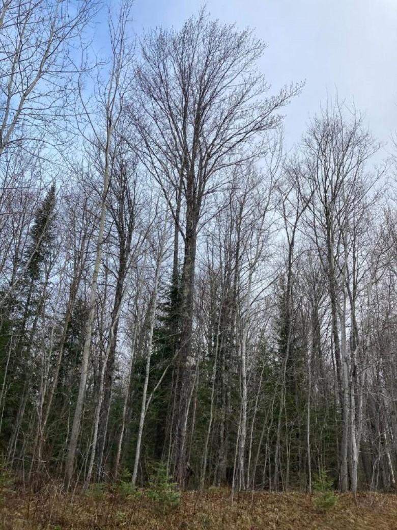 NEAR Bradley Lake Rd, Lincoln, WI by First Weber Real Estate $64,750
