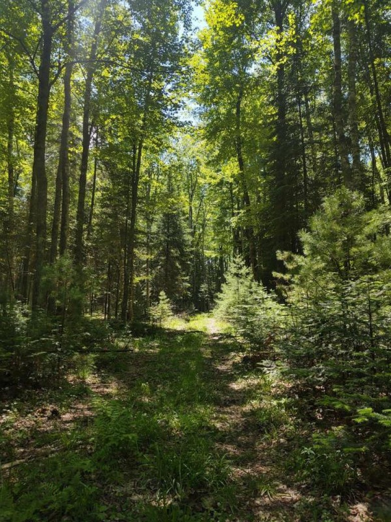 ON Silver Lake Rd Sugar Camp, WI 54501 by First Weber Real Estate $175,000