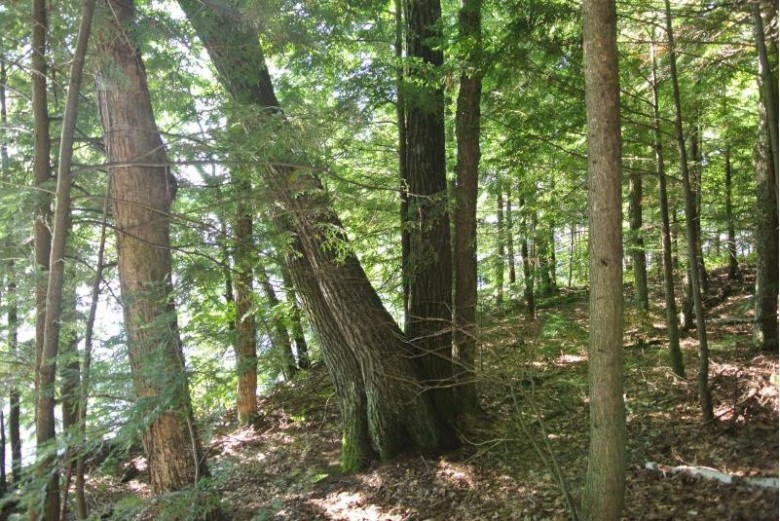 ON Clear Lake Rd E Minocqua, WI 54548 by Redman Realty Group, Llc $999,000