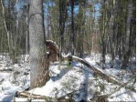 Mountain Shadow Lane, Wautoma, WI by First Choice Realty, Inc. $30,000