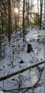 Hwy 8, Laona, WI by Symes Realty, LLC $49,900