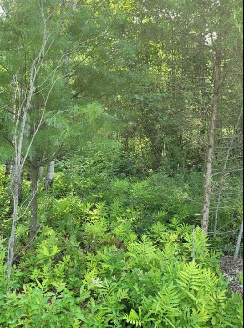 Vacant Land 19th Avenue Wautoma, WI 54982 by First Weber Real Estate $55,000
