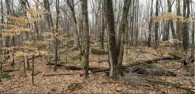 Wesley Road, Iola, WI by Whitetail Dreams Real Estate, LLC $55,000