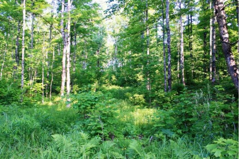 TBD East Shore Rd, Marenisco, MI by First Weber Real Estate $299,950