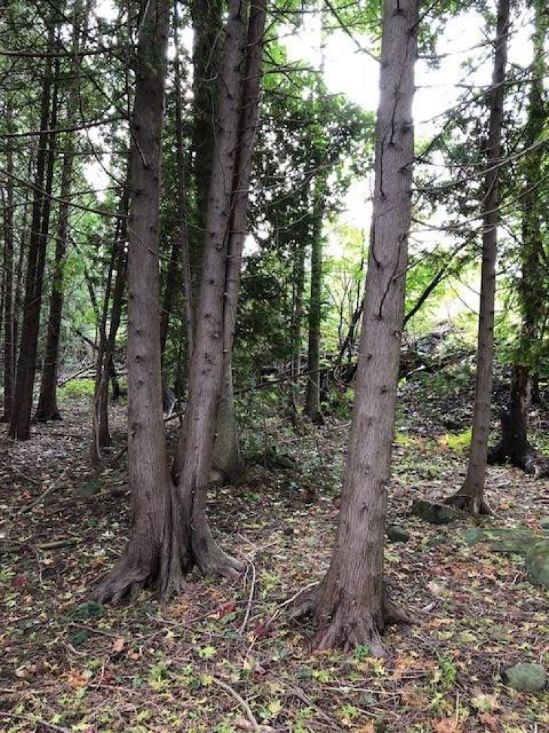 TBD Sibley Ave LOTS 8 & 9, Houghton, MI by Century 21 North Country Agency $25,000