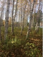 TBD Lake Rd 2, Ironwood, MI by The Real Estate Store $79,900