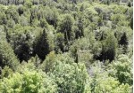 TBD Us41, Delaware, MI by Northern Michigan Land Brokers - H $29,900