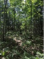 TBD Lintula Rd, Munising, MI by Re/Max Superiorland $27,500