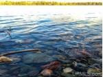 LOT #12 University Rd 12, Iron River, MI by Wild Rivers Realty-Ir $109,900
