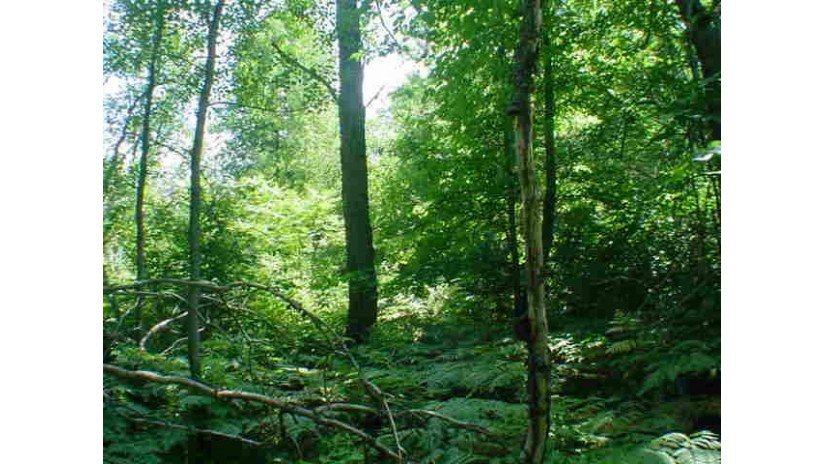 Lt1 Hwy 64 Wolf River, WI 54491-9740 by Re/Max North Winds Realty, Llc $20,000
