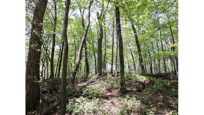 4769 Turkey Trail Lot #20 Woodland Hei Amherst, WI 54406 by First Weber $32,500