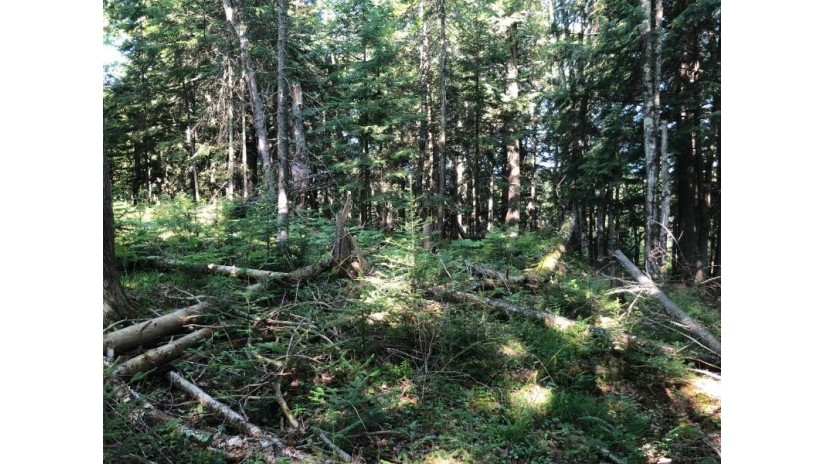 On Palmer Lake Rd Land O Lakes, WI 54540 by Lakeplace.com - Vacationland Properties $99,000