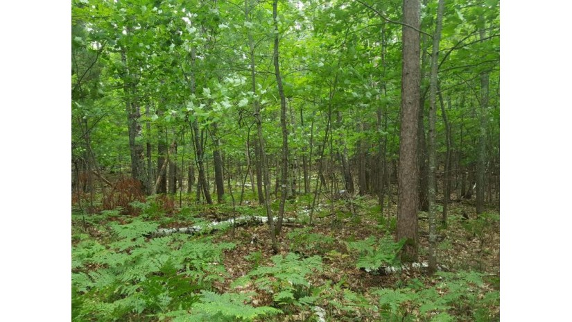 On Birch Rd Land O Lakes, WI 54540 by Re/Max Property Pros $159,900