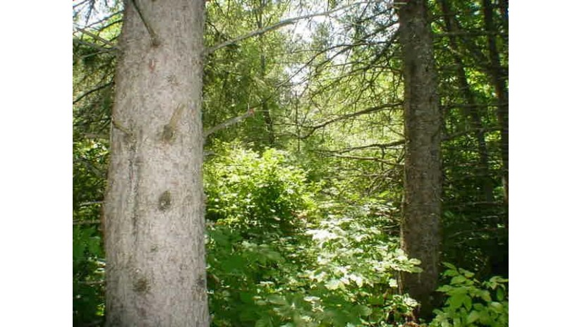 HWY 64 Wolf River, WI 54491-9740 by RE/MAX North Winds Realty, LLC $20,000