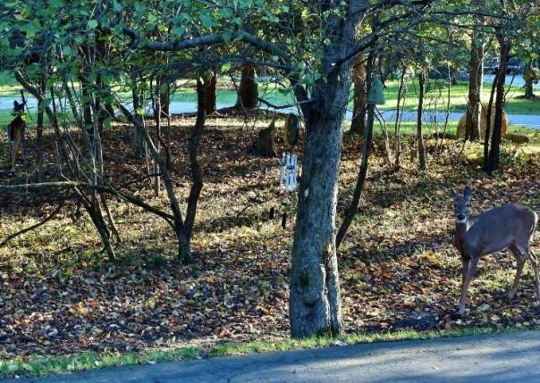 4850 Hidden Brook, Ann Arbor, MI, 48105